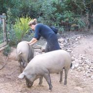 20111001-02 Schweine w Malika 2