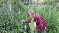 wildplukken in het voedselbos