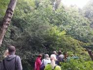 forest garden Martin Crawford