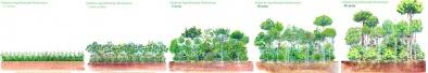 voedselbos ontwerp met successie