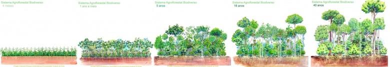 voedselbos successie