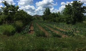 voedselbos stroken met tussenteelt in 1e fase