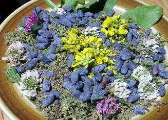 voedselbos wildpluk oogst honingbes brandnetelzaad klaver